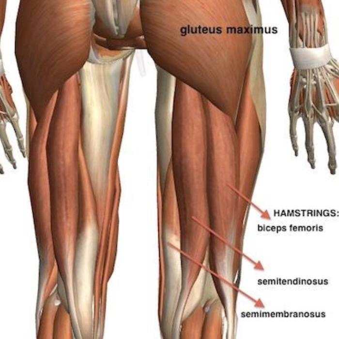Hamstring Strains A Proven Rehabilitation Approach